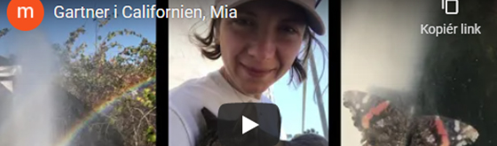 Video fra PIU